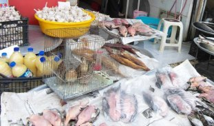 پاکسازی ساحل مجازات فروشنده غیرمجاز پرندگان